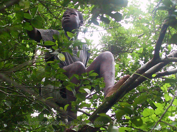 Young Jamaican Man In Tree